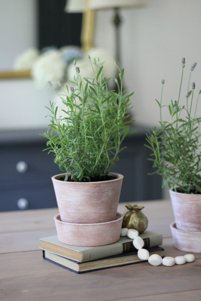 White-Washing terra cotta pots & tips for growing Lavender indoors